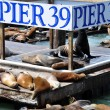 Sea Lions, pier 39 — Stock Photo #5466651