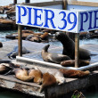 Sea Lions, pier 39 — Stock Photo #5466652