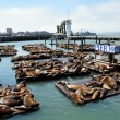 Sea Lions, pier 39 — Stock Photo