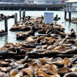 Sea Lions, pier 39 — Stock Photo #5468632