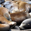 Sea Lions, pier 39 — Stock Photo #5468653
