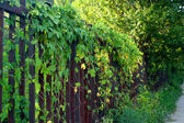 Fence, foliage, garden, green, house, metal — Stock Photo