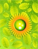 Sol com folhas. conceito de natureza — Vetor de Stock
