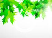 Vektör yaprak yeşil arka arka plan — Stok Vektör