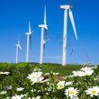 Stock Photo: Wild daisy against blue sky with giant Wind turbine as backgro