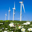 Wild daisy against blue sky with giant Wind turbine as backgro — Stock Photo #5548644