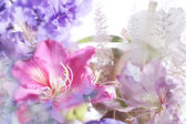 Beautiful flowers made with soft focus — Stock Photo