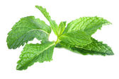 Fresh mint leaves isolated on a white background — Stock Photo