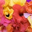 Tropical flowers - Hibiscus  and Bougainvillea — Stock Photo