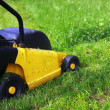 Mowing Lawn — Stock fotografie