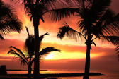 Red tropical sunset and palm — Stock Photo