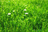 Drop of dew on green grass background — Stock Photo