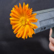 Stock Photo: Gun with flower