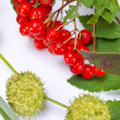 Rowanberry and other fruits — Stock Photo