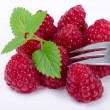 Stock Photo: Raspberry (Rubus idaeus)
