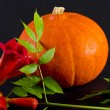Cucurbita and American Trumpet Vine — Stock Photo