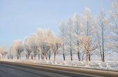 The road in the winter. — Stock Photo