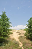 Sand dunes. — Stock Photo
