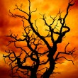 Surreal dead tree — Stockfoto