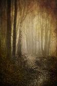 林地路径 — 图库照片