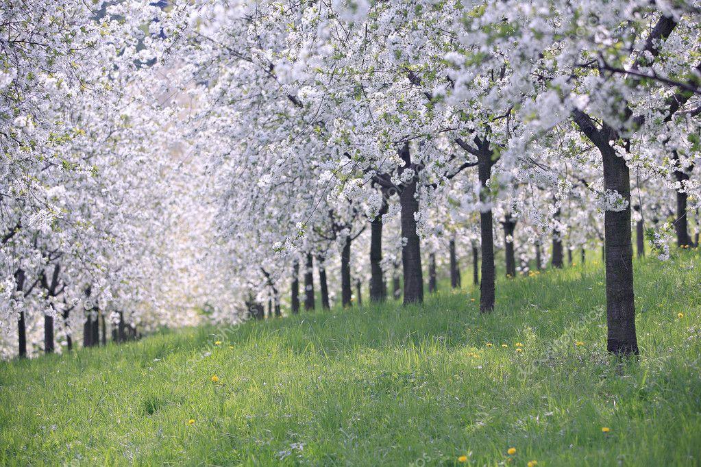 Край родной да яблоневый сад скачать песню