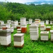 Wooden hives on the picturesque glade in the mountains — Foto Stock