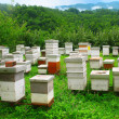 图库照片: Wooden hives on the picturesque glade in the mountains