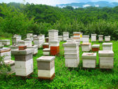 Wooden hives on the picturesque glade in the mountains — Stock Photo