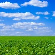 Royalty-Free Stock Photo: Field and blue sky