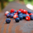 Colourful forest berries — Stock Photo