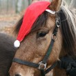 Royalty-Free Stock Photo: Xmas horses