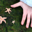 Starfish — Foto Stock