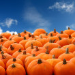 Scenes of halloween with pumpkins — Stock Photo