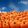 Scenes of halloween with pumpkins - Stock Photo