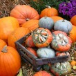 Stock Photo: Scenes of halloween with pumpkins