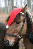 Cavalli di Natale — Foto Stock