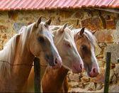 Tree horses — Stock Photo