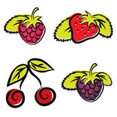 Strawberry, raspberry, cherry and blackberry — Stock Vector