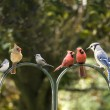 Stock Photo: Bird Diversity Meeting