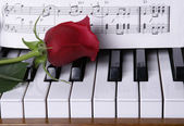 Piano with red rose — Stock Photo