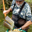 Prospector panning for gold in river — Stock Photo #5648468