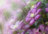 Flowers in sun light — Stock Photo