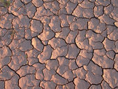 Earth is cracked by heat and dryness — Stock Photo