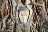 Buddha face covered by roots Mahathat temple — Stock Photo