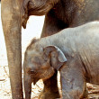 Stock Photo: Elefant family in open area