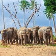 Flock of elephants in the wilderness - Stock Photo