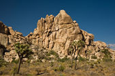 Scenic rocks and trees in Joshua tree national park — Stock Photo