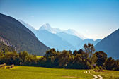 Beautiful landscape in the tirolean Alps, good smelling grass and wonderful — Stock Photo
