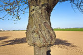 Detail of tree with field in background and skyline — Stock Photo