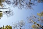 Coroa de árvore com folhas coloridas — Fotografia Stock